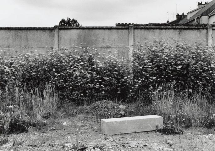 Calais Umbellifer Wall Web