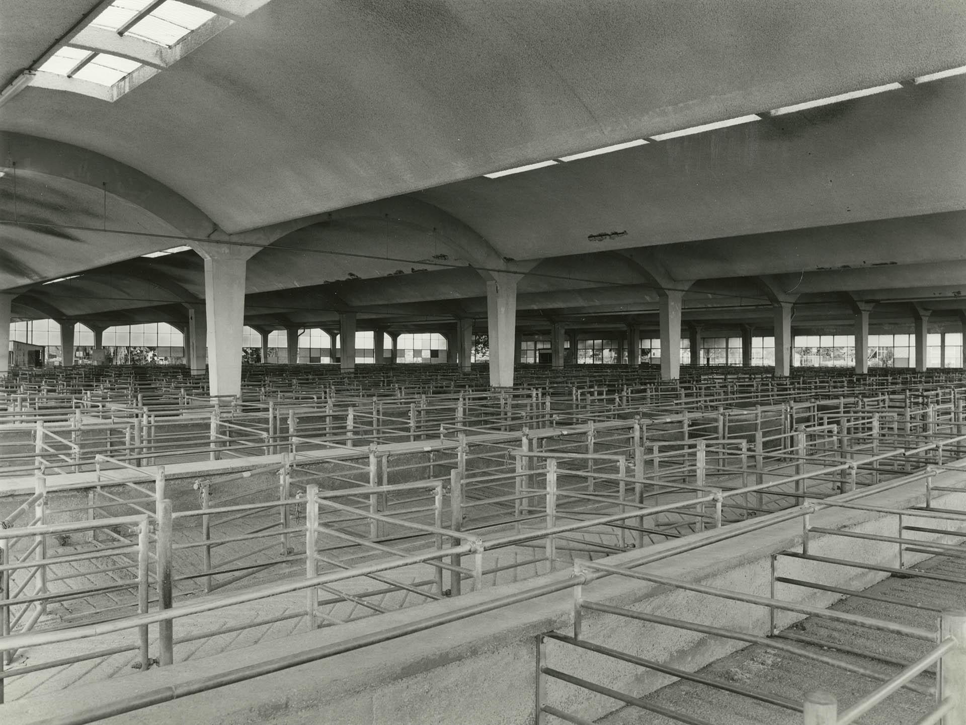 Photolanguage Gloucester Cattle Market - Web DOC287