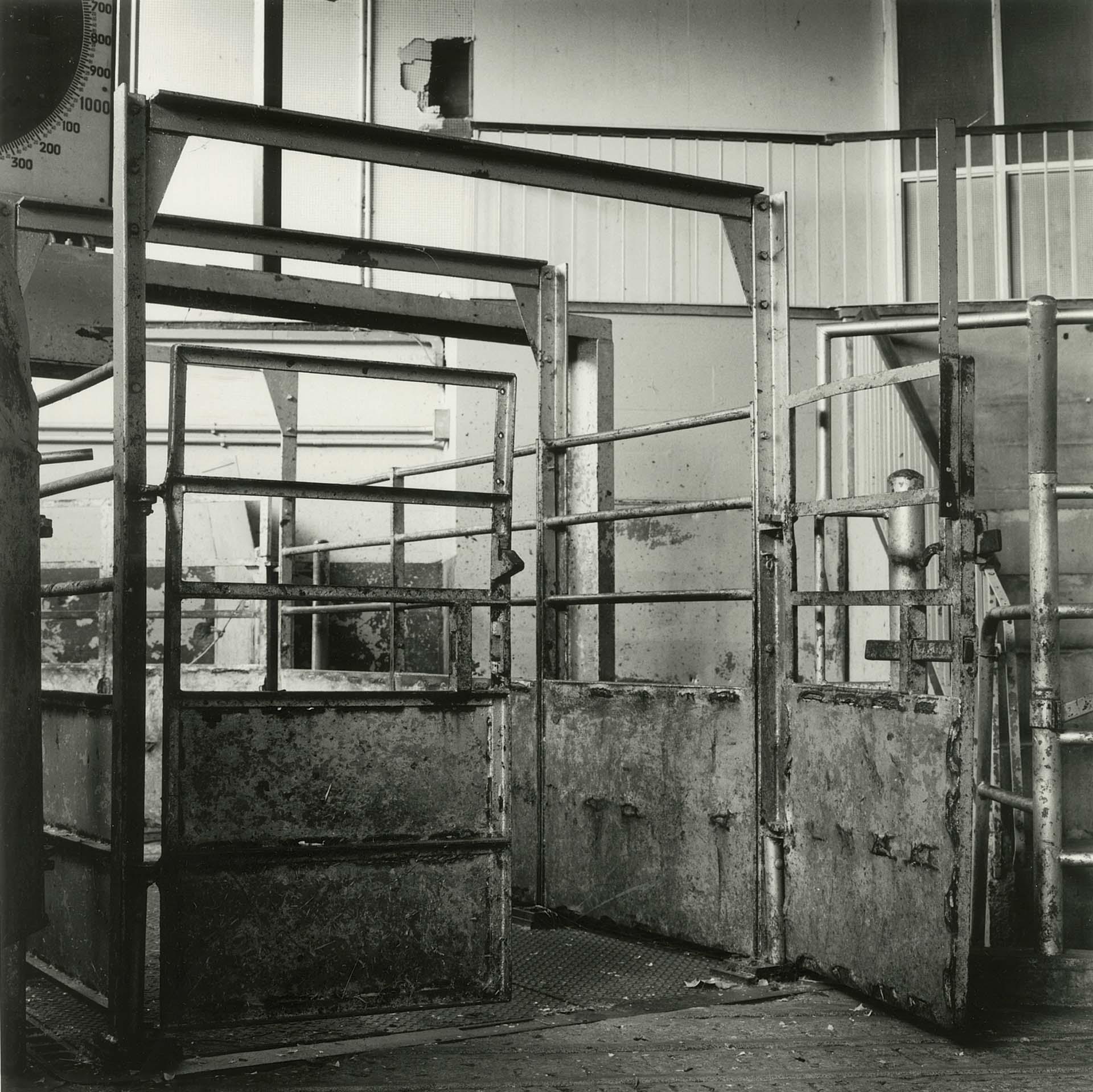 Photolanguage Gloucester Cattle Market - Web DOC294