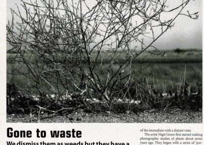 Robin Wilson, 'Gone to Waste' (a reflection on the botanical and landscape photography of Nigel Green), The Architects' Journal, 2004.